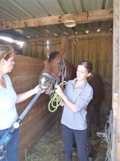 dentiste-cheval-shaheen-1