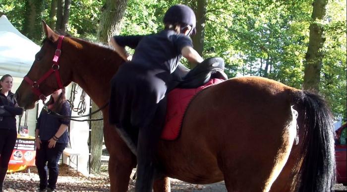 cheval-shaheen-besuperglad-2
