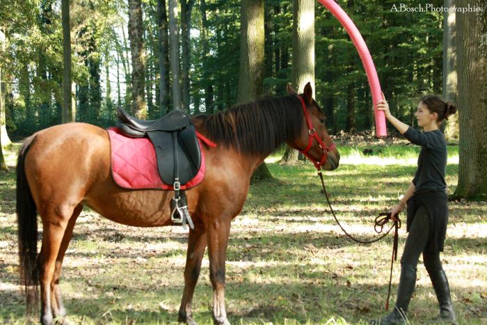 frite-cheval-shaheen-besuperglad-2