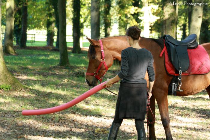 frite-cheval-shaheen-besuperglad
