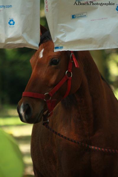 portrait-cheval-shaheen-besuperglad-4