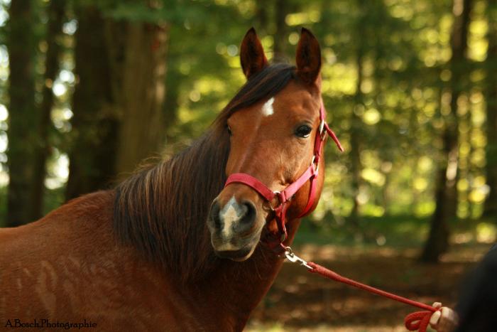 portrait-cheval-shaheen-besuperglad